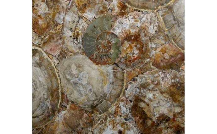 Эксклюзивные камни - Brown Petrified
