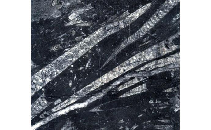 Мрамор - FOSSILE NERO